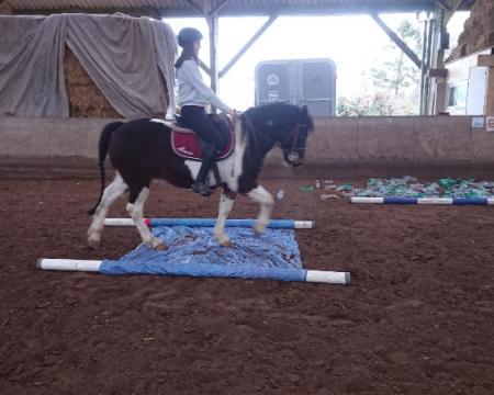 nouveaux exercices ludiques à faire avec votre cheval pour le descensibiliser